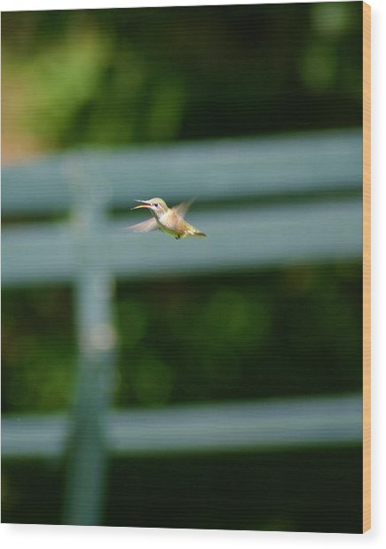 Hummer In Flight Wood Print