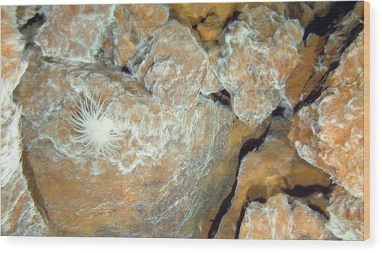 Hydrothermal Bacterial Mat Wood Print by B. Murton/southampton Oceanography Centre/ Science Photo Library
