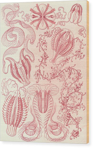 Illustration Shows Comb Jellies. Ctenophorae Wood Print by Artokoloro