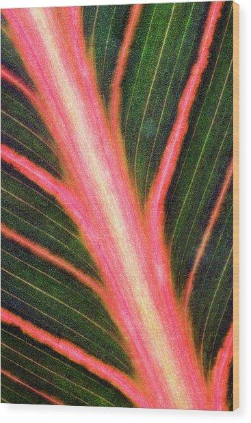 Indian Shot (canna 'durban') Leaf Wood Print