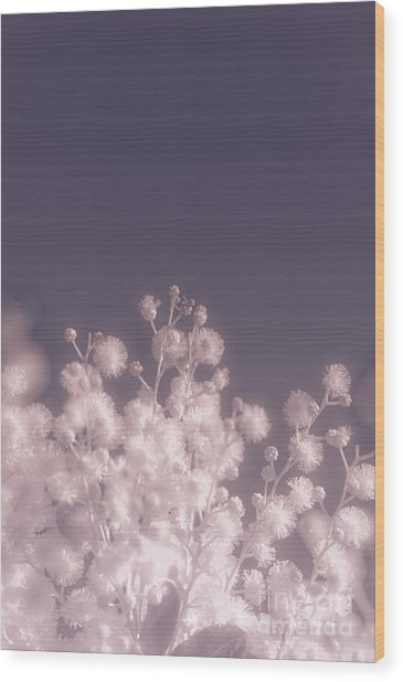 Infrared Nature Bloom Wood Print