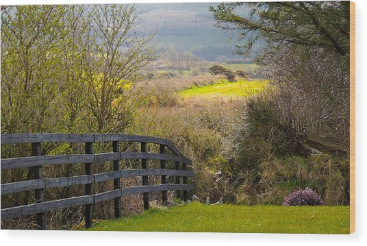 Irish Countryside In Spring Wood Print
