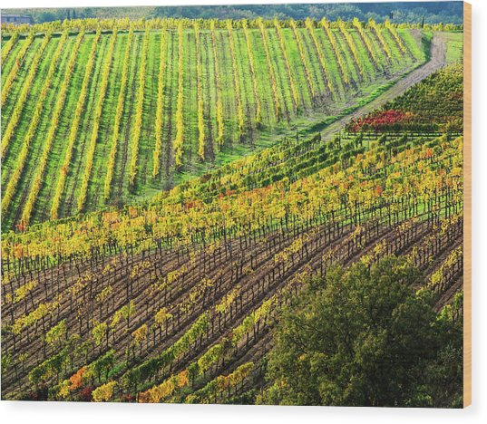 Italy, Montepulciano, Autumn Vineyard Wood Print by Terry Eggers