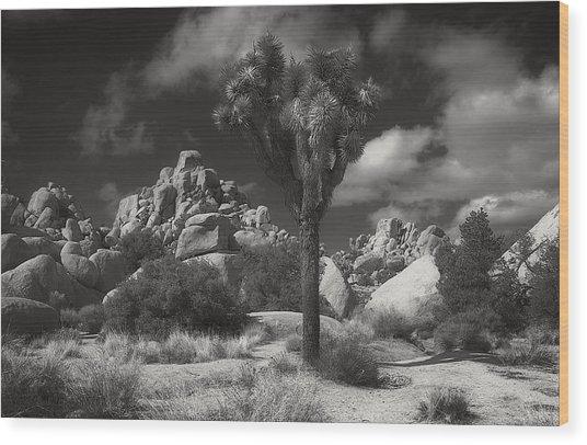 Joshua Tree National Park Wood Print