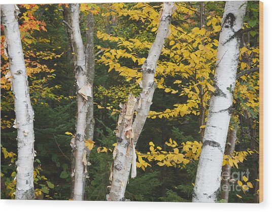 Kancamagus Highway - White Mountains New Hampshire Wood Print