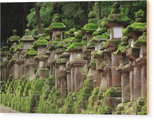 Kasuga-taisha Shrine In Nara, Japan Wood Print by Paul Dymond