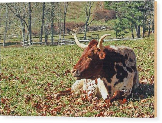 Lazy Morning Bull Wood Print