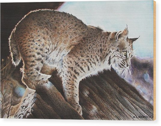 Linns Valley Bobcat Wood Print by Ric Ricards