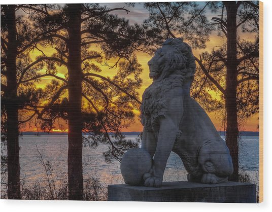 Lion At Sunset Wood Print