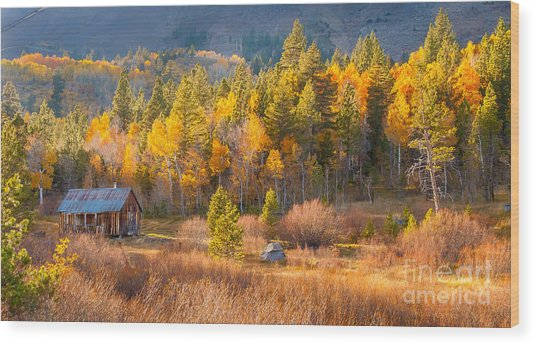 Lone Cabin Wood Print
