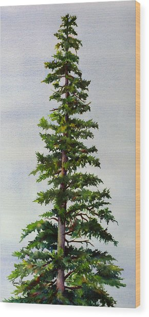 Lone Spruce Wood Print
