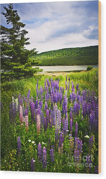 Lupin Flowers In Newfoundland Wood Print
