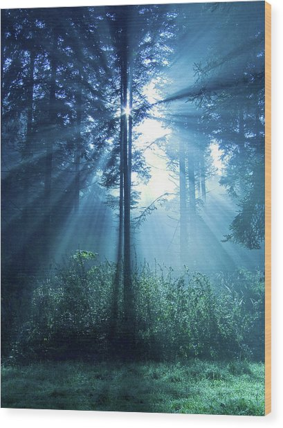 Magical Light Wood Print