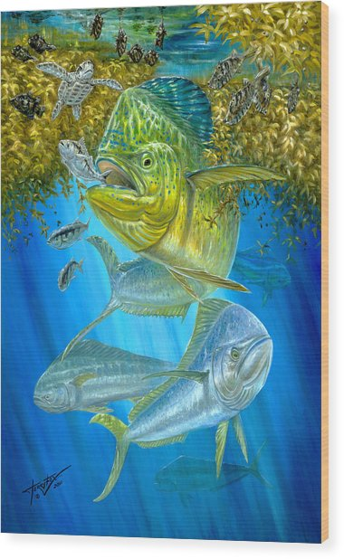 Mahi Mahi Hunting In Sargassum Wood Print