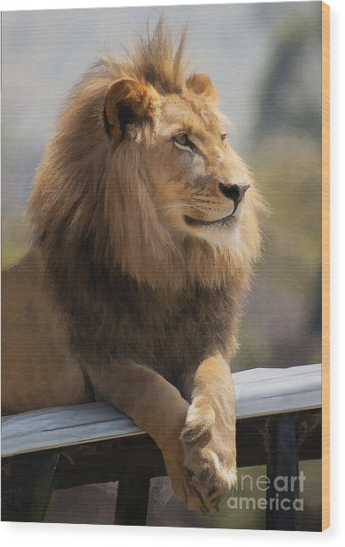 Majestic Lion Wood Print