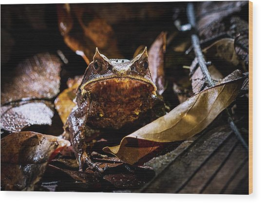 Malayan Horned Frog Camouflaged Wood Print