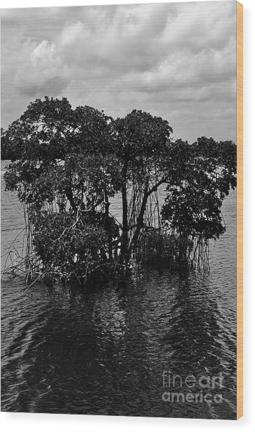 Mangrove Island Wood Print by Andres LaBrada