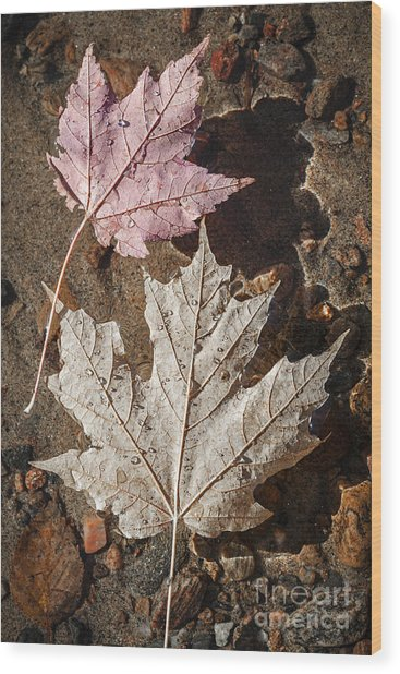 Maple Leaves In Water Wood Print