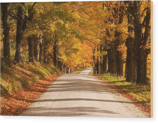 Maple Tree Canopy Wood Print