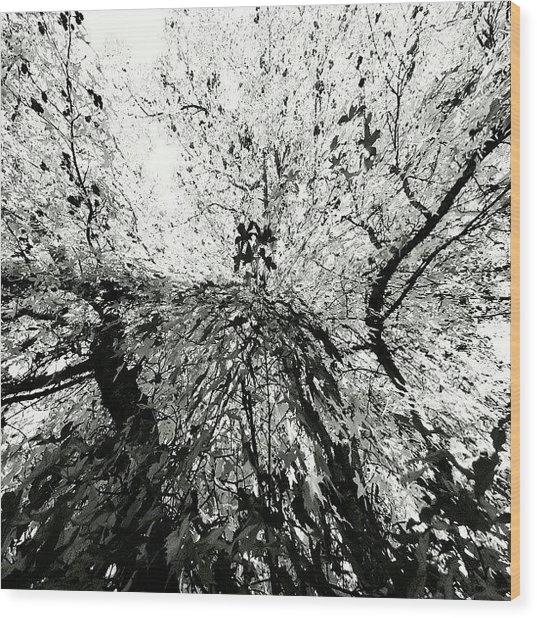 Maple Tree Inkblot Wood Print