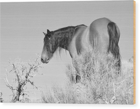 Mare Up High Wood Print