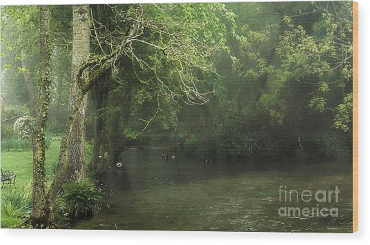 Misty Morning In Clatford Wood Print