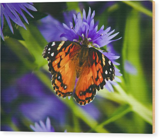 Monarch And Flower Wood Print