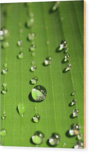 Water Drop On Green Leaf Wood Print