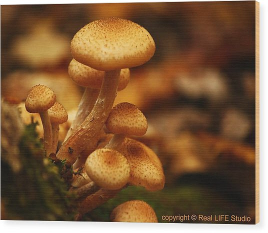 Mushrooms Of Fall Wood Print