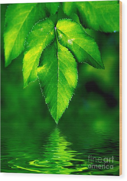 Natural Leaves Background Wood Print
