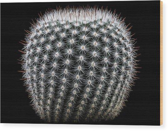 Notocactus Scopa Wood Print by Victor Mozqueda