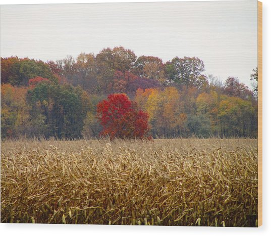 November Wood Print by Andrea Dale