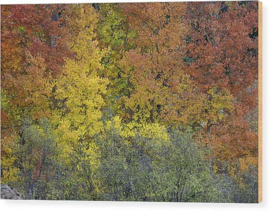 Ode To Autumn  Wood Print