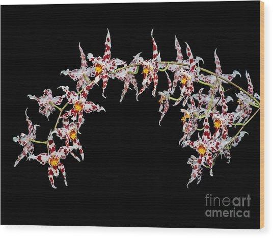 Odontoglossum X Andersonianum Wood Print by Geoff Kidd