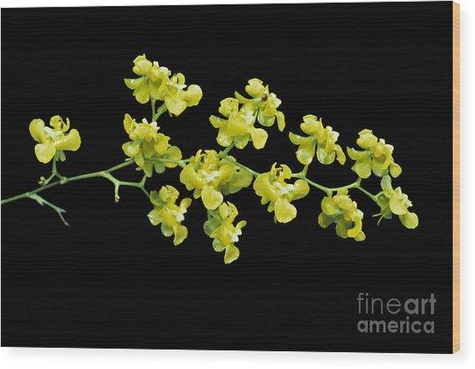 Oncidium Cheirophorum Wood Print by Geoff Kidd