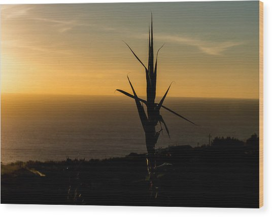 One At Sunset Wood Print