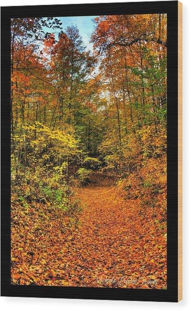 Orange Path Wood Print