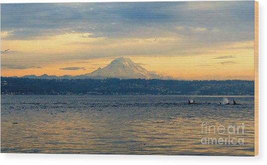 Orca Family And Mt. Rainier Wood Print