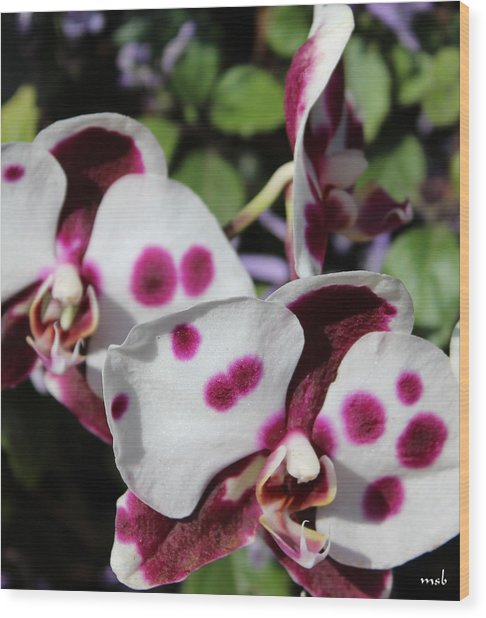 Orchid One Wood Print by Mark Steven Burhart