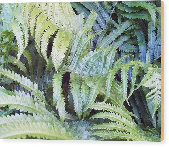Ostrich Fern Wood Print by Gene Cyr