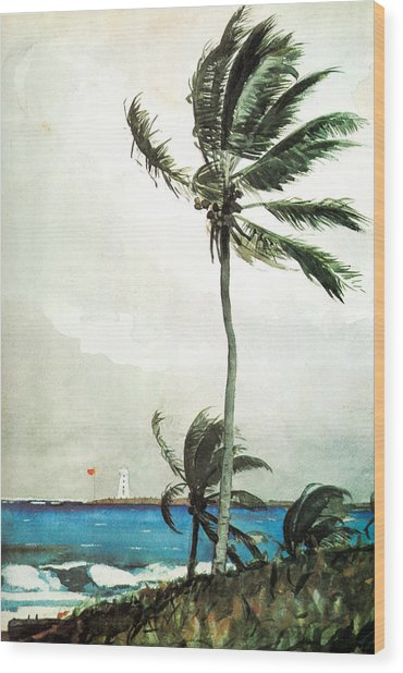 Palm Tree Nassau Wood Print