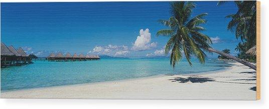 Palm Tree On The Beach, Moana Beach Wood Print