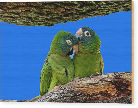 Parakeet Pair Wood Print