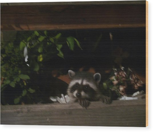 Peek-a-boo Baby Wood Print by Jacquelyn Roberts