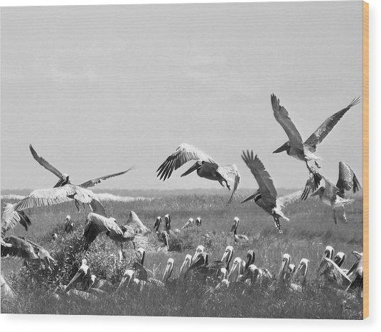 Pelicans Wood Print by Thomas Leon