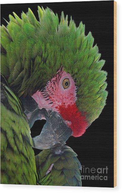 Pensive Parrot Wood Print