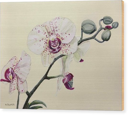 Phalaenopsis Black Panther Orchid Wood Print