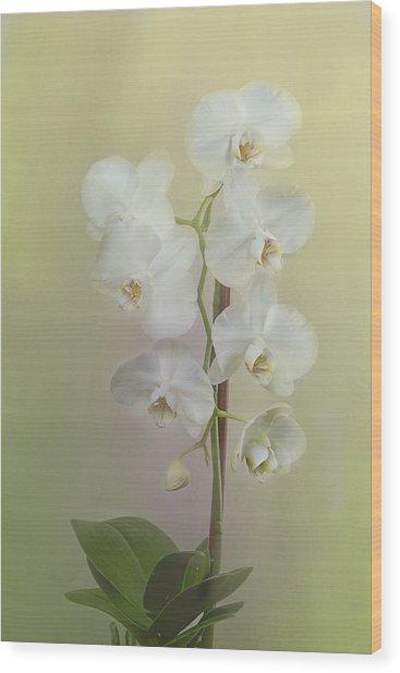 Phalaenopsis Wood Print