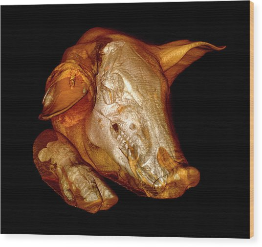 Pig Wood Print by Thierry Berrod, Mona Lisa Production/ Science Photo Library