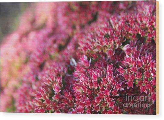 Pink Flower Bouquet Wood Print by Jolanta Meskauskiene